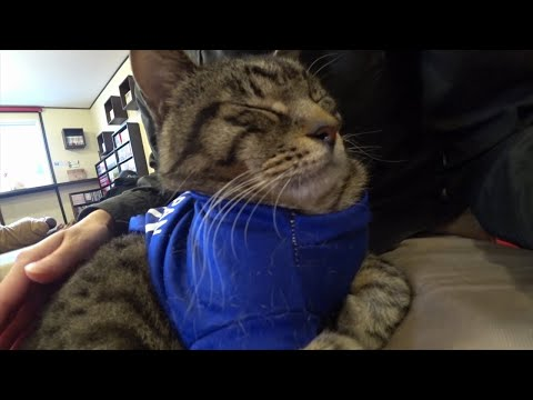 猫不足解消のかわいい猫動画 にゃんこ達のサービスシーンで癒されます