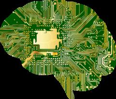 脳の形の基盤