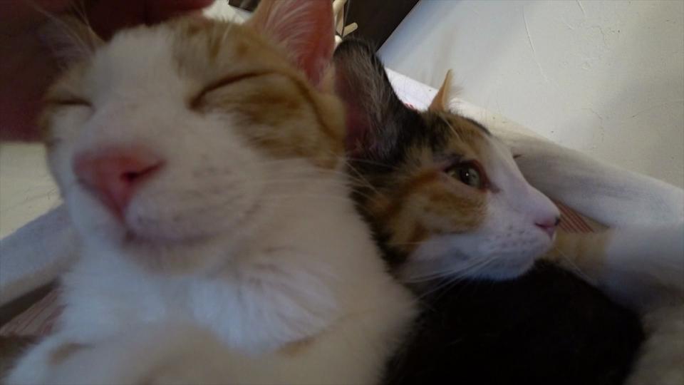 ナデナデにご満悦の2匹の子猫