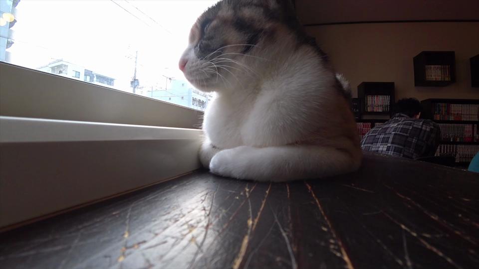 窓の外を見てたそがれている猫