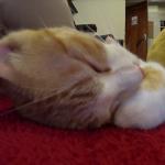 【猫動画】たまには仕事を忘れて猫に囲まれて癒されてきました
