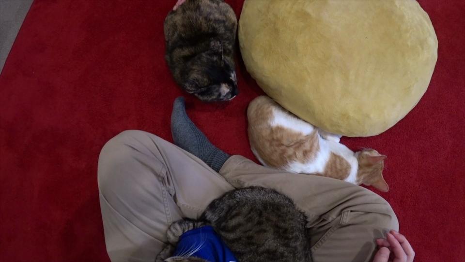 周りを囲んでおもてなしをしている3匹の猫