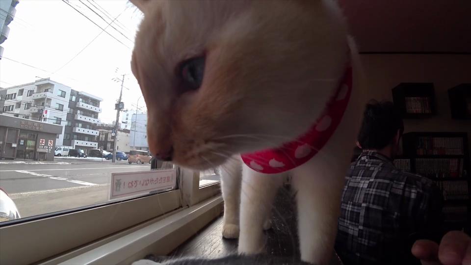 カメラに近寄ってきた猫
