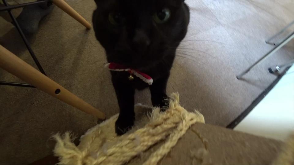 カメラに興味津々な黒猫