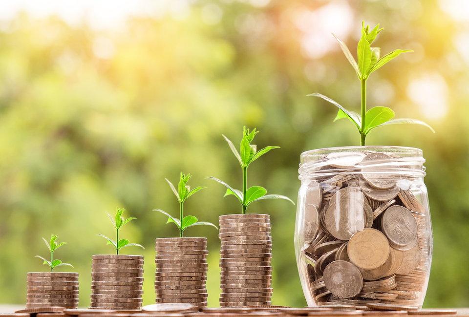 投資したお金から出た芽