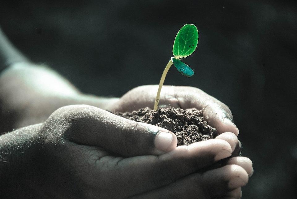 植物 芽 成長 双葉 手